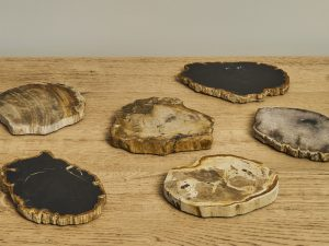 Coaster Petrified Wood s