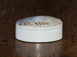 Box shell sm