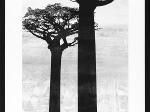 TREE DAWN